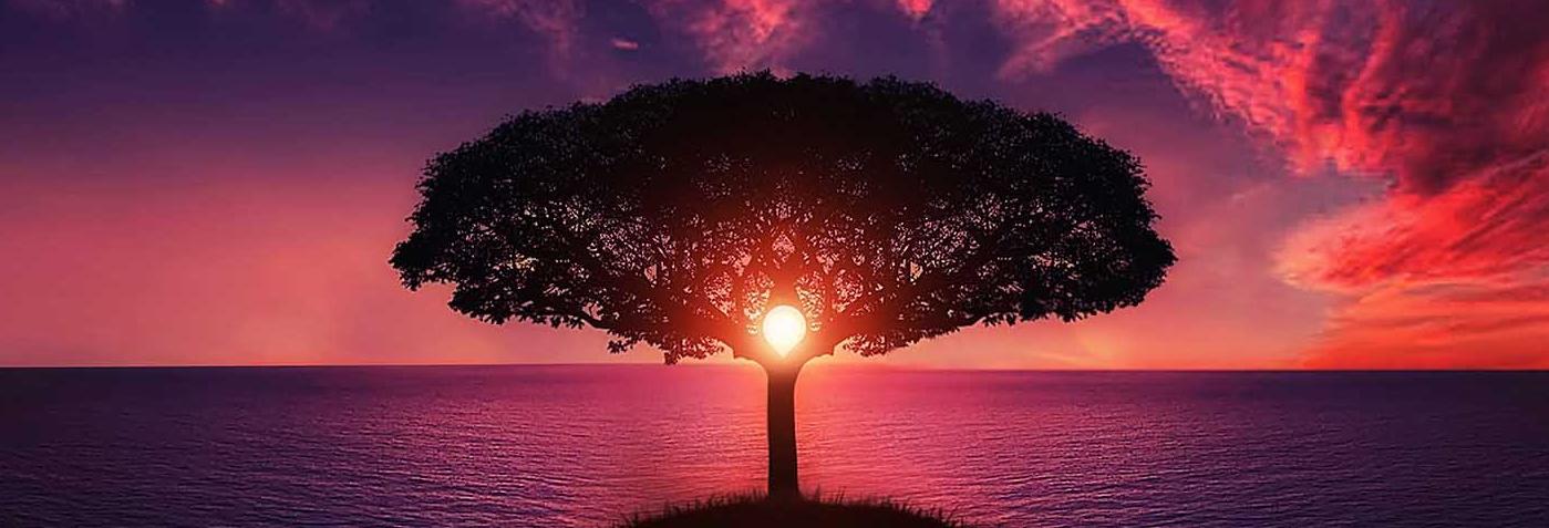 tree-736885 1399x477